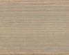 9212_Silber-Pappel